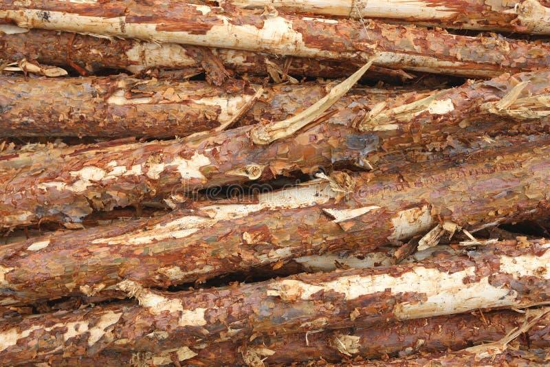 Fond de rondin de bois de construction ou de bois de charpente de pin images libres de droits