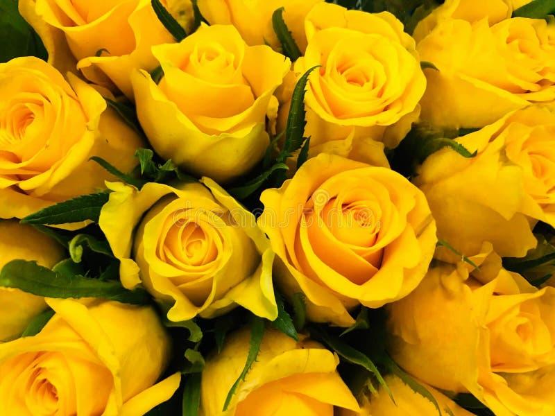 Fond de Rose jaune image libre de droits