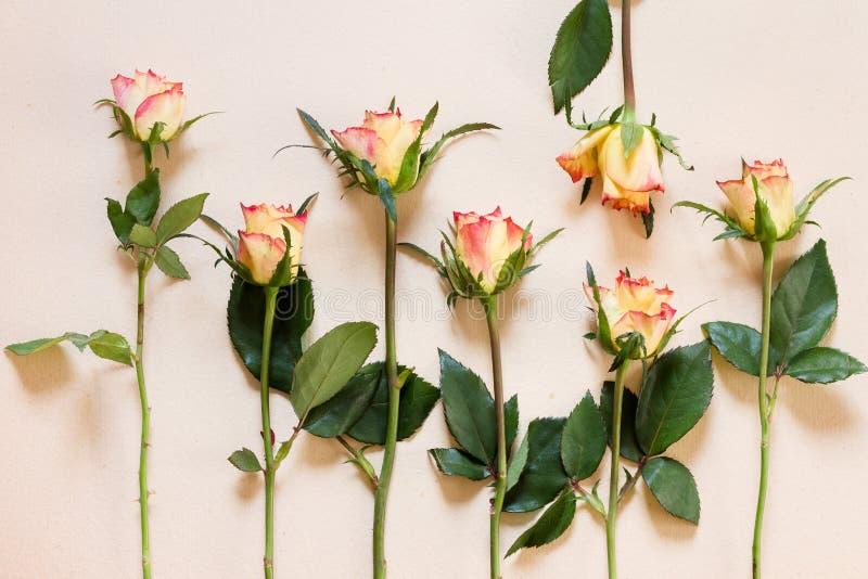 Fond de roses photo libre de droits