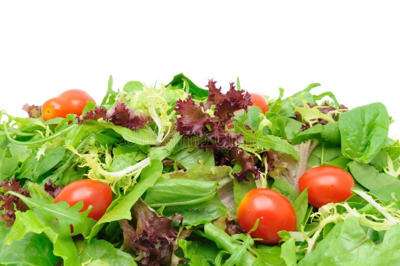 Fond de salade verte images libres de droits