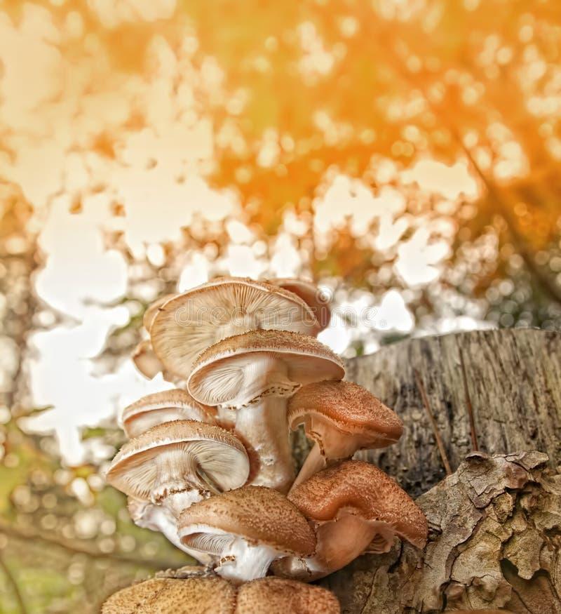 Fond de scène d'automne photographie stock libre de droits