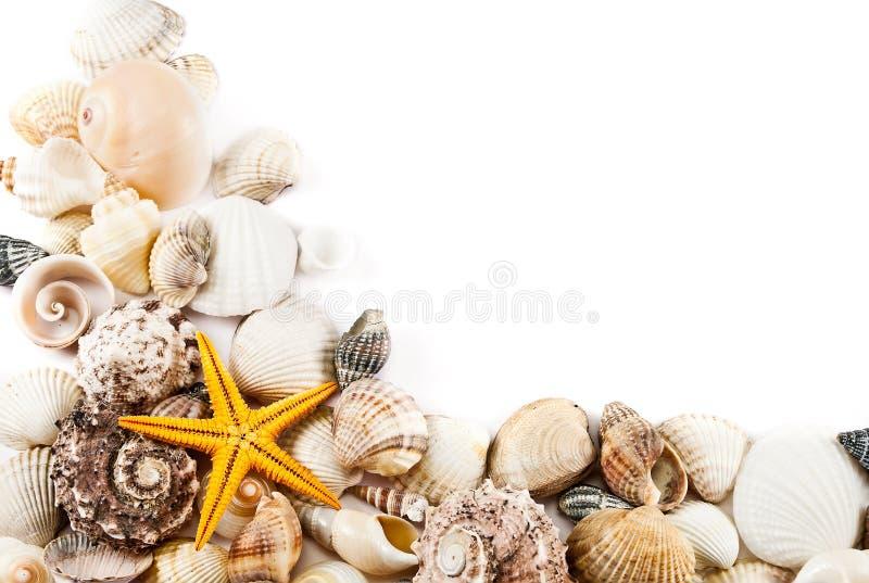 Fond de Seashell. photographie stock libre de droits