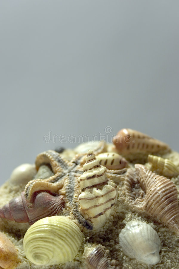 Fond de Seashells photographie stock libre de droits