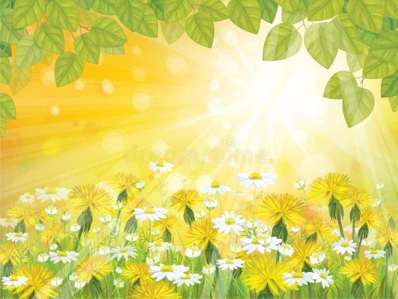 Fond de soleil de vecteur avec des branches de congé illustration stock