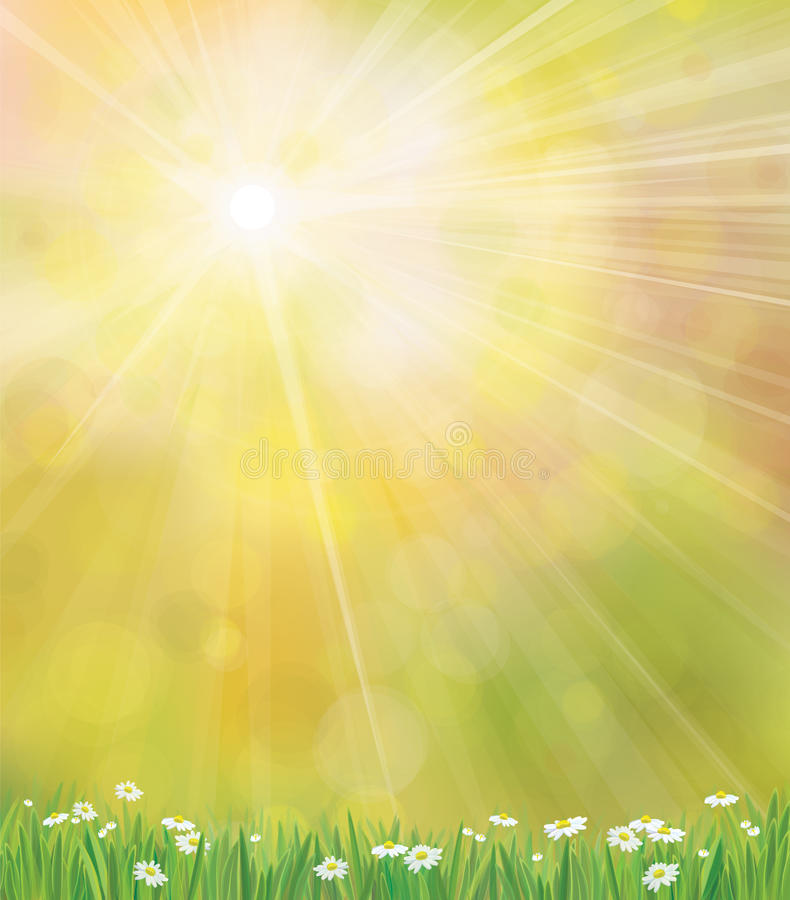 Fond de soleil de vecteur avec l'herbe et le chamomi illustration libre de droits