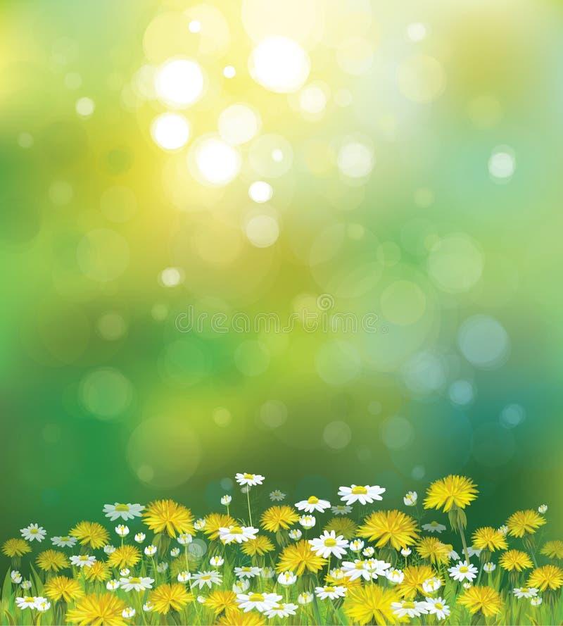 Fond de soleil de vecteur avec les camomilles et le Dan illustration libre de droits