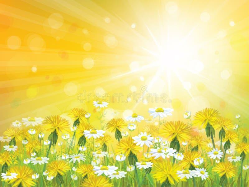Fond de soleil de vecteur avec les camomilles jaunes  illustration de vecteur