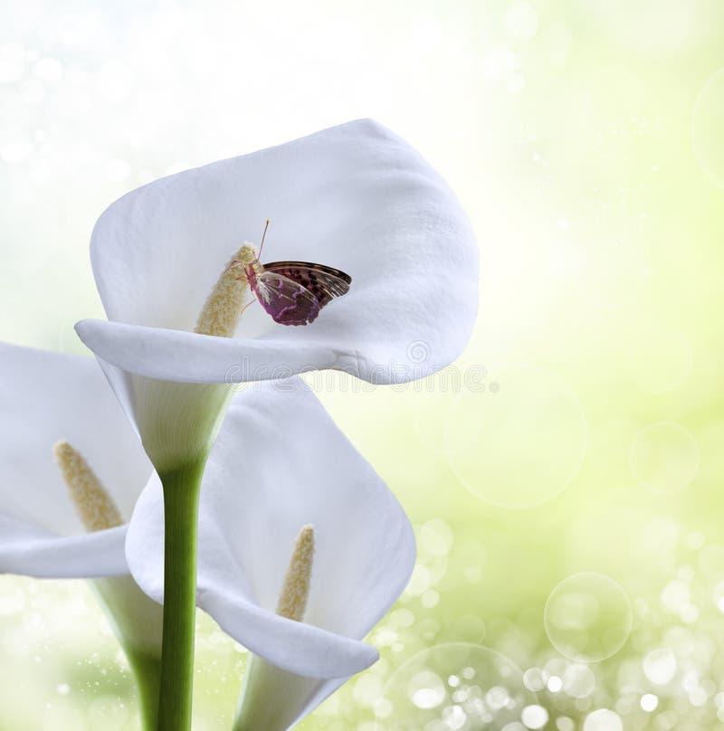 Fond de source. guindineau sur une fleur photo stock