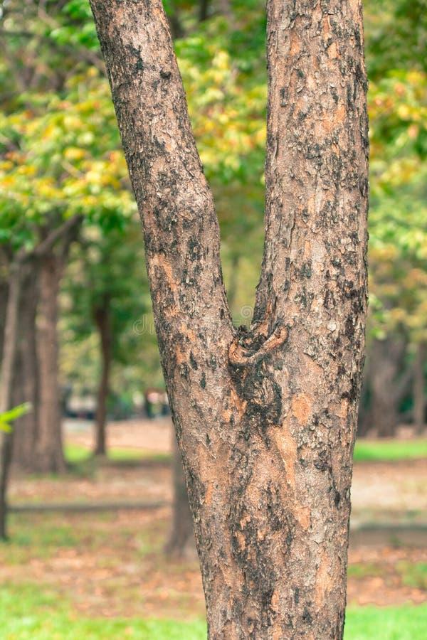 Fond de tache floue d'arbre en parc de la Thaïlande photos stock