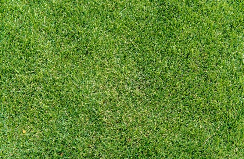 Fond de texture de champ d'herbe verte pour le terrain de jeu etc. d'enfants images libres de droits