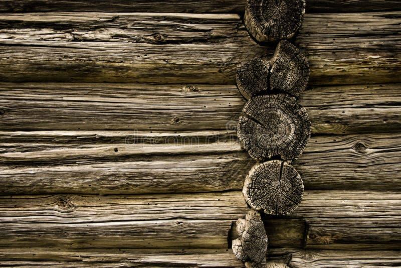 Fond de texture d'arbre photographie stock