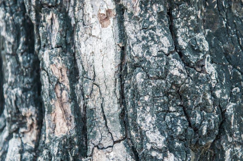 fond de texture d'arbre de ?Bark image stock