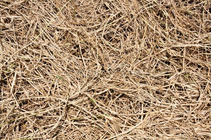 Fond de texture d'herbe sèche photographie stock libre de droits