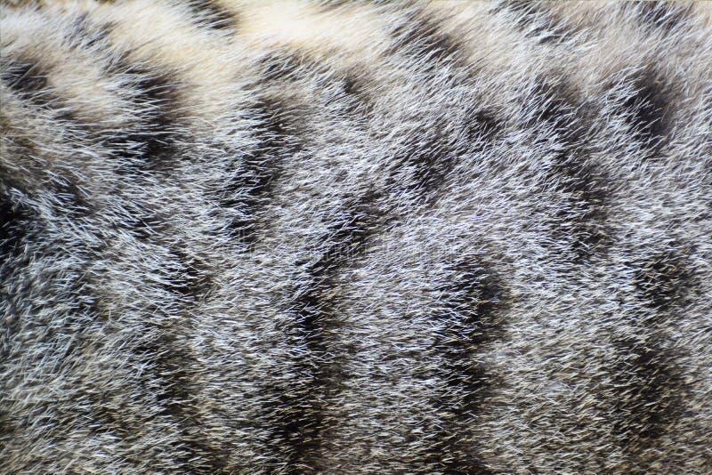 Fond de texture de fourrure de chat images stock