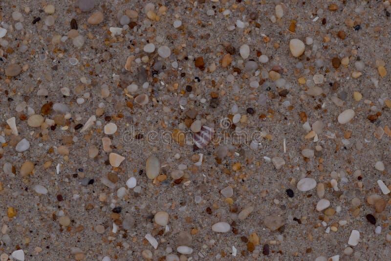 Fond de texture de sable de plan rapproché avec les grains fins et les coquilles de mer images libres de droits