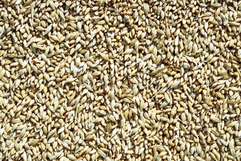 Fond de textures de blé photographie stock libre de droits