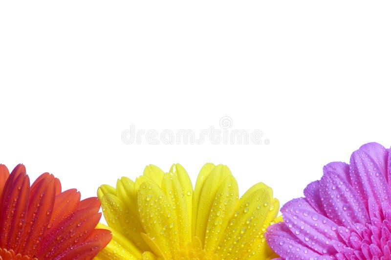 Fond de trois fleurs photographie stock libre de droits