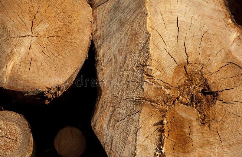 Fond de tronçon en nature image stock