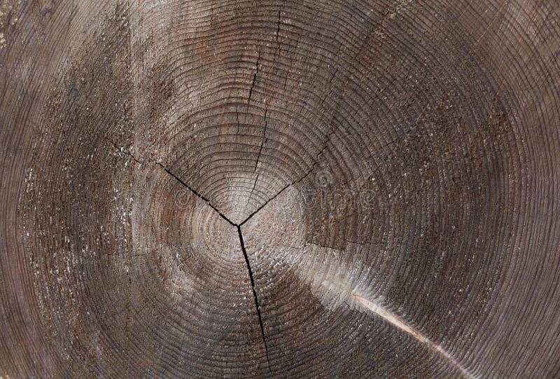 Fond de tronçon en nature photos stock