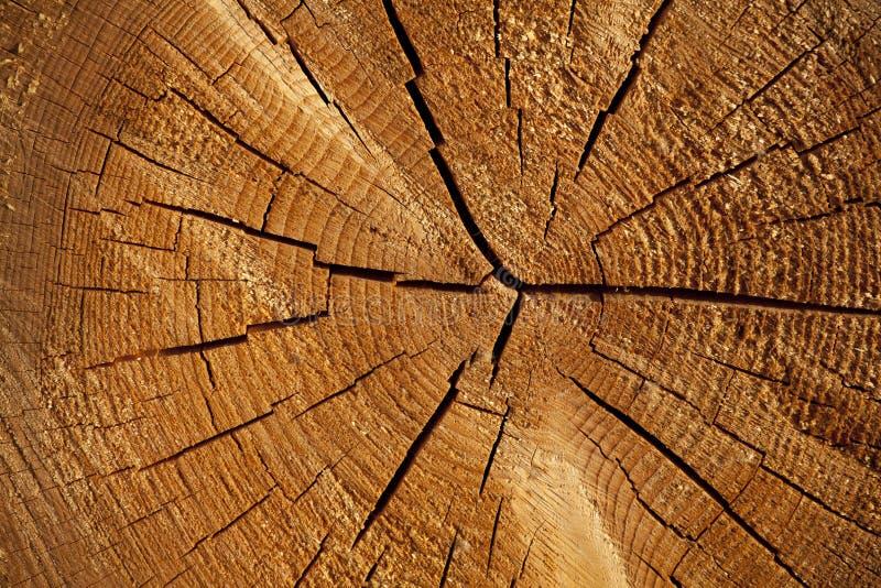 Fond de tronçon en nature image libre de droits