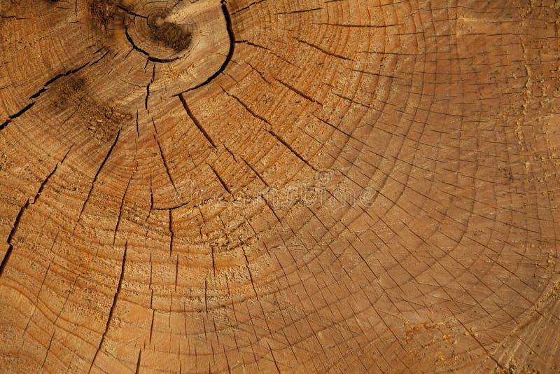 Fond de tronçon en nature photographie stock