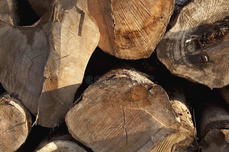 Fond de tronçon en nature photo libre de droits