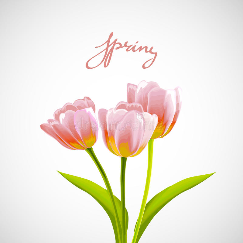 Fond de tulipe de fleur illustration stock