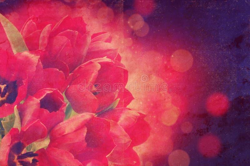 Fond de tulipes de vintage photographie stock libre de droits