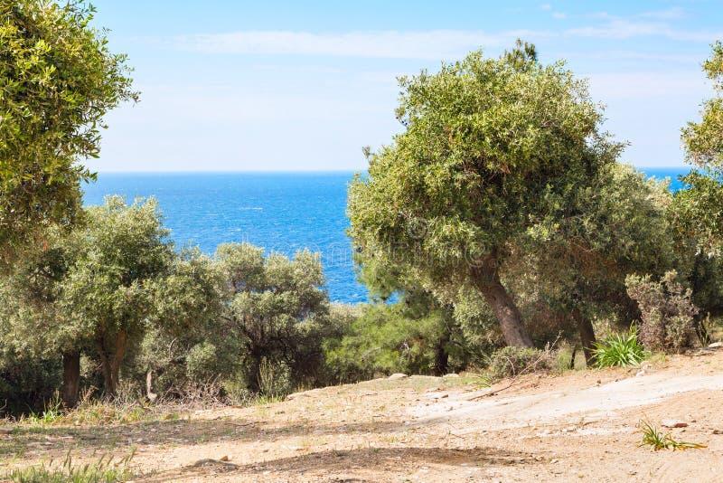 Fond de vacances d'été avec l'île grecque Thasos, les oliviers et la mer, Grèce image stock
