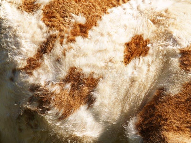 Fond de vache, (1) photographie stock