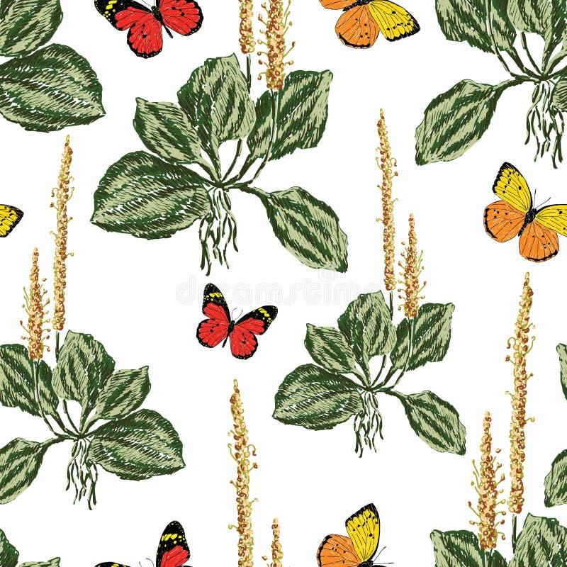 Fond de vecteur de plantain et de papillons illustration de vecteur