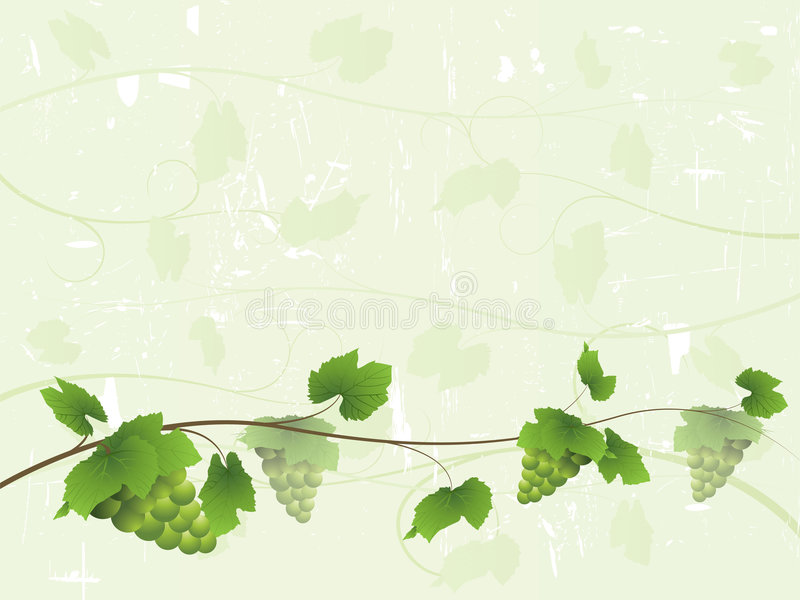 Fond de vigne avec des raisins verts illustration stock