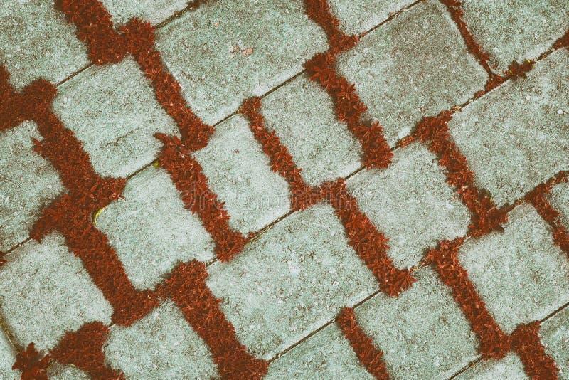 Fond de vintage des tuiles en béton diagonales avec les usines rouges image stock
