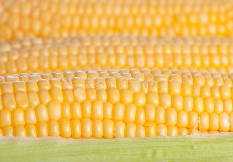 Fond des épis de maïs photos libres de droits