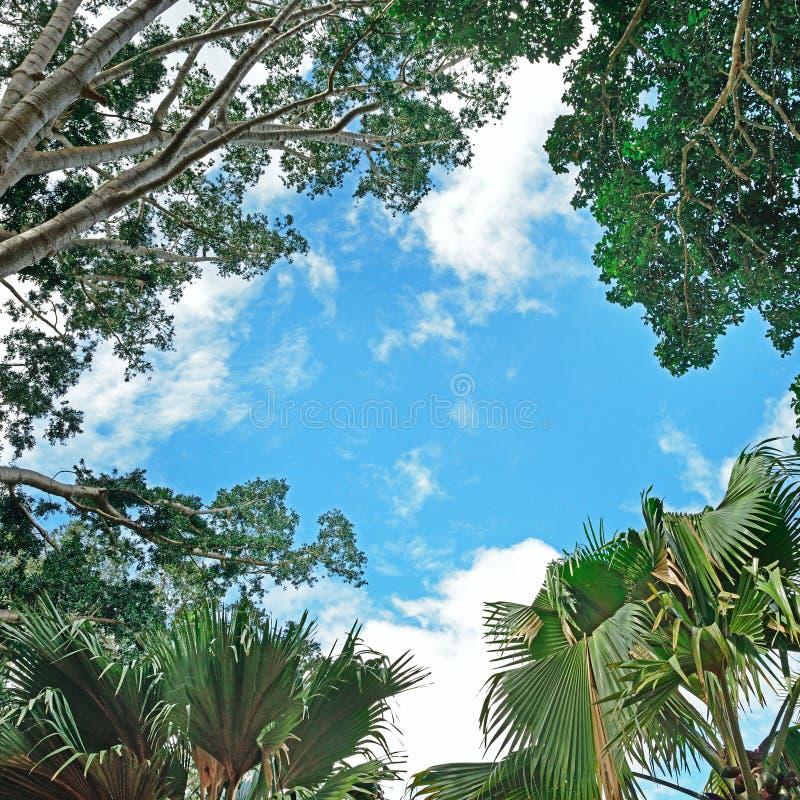 Fond des branches des arbres photographie stock libre de droits