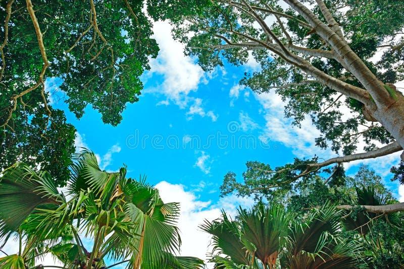 Fond des branches des arbres photos libres de droits