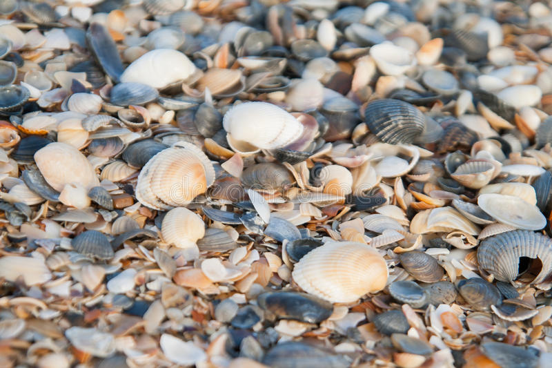Fond des coquilles colorées de mer photographie stock libre de droits