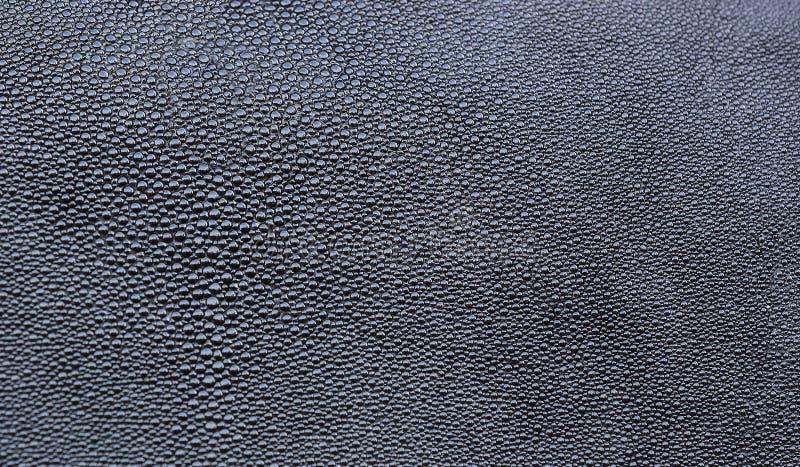 Fond des crampe-poissons de peau photos libres de droits