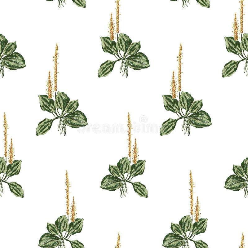Fond des croquis du plantain illustration stock