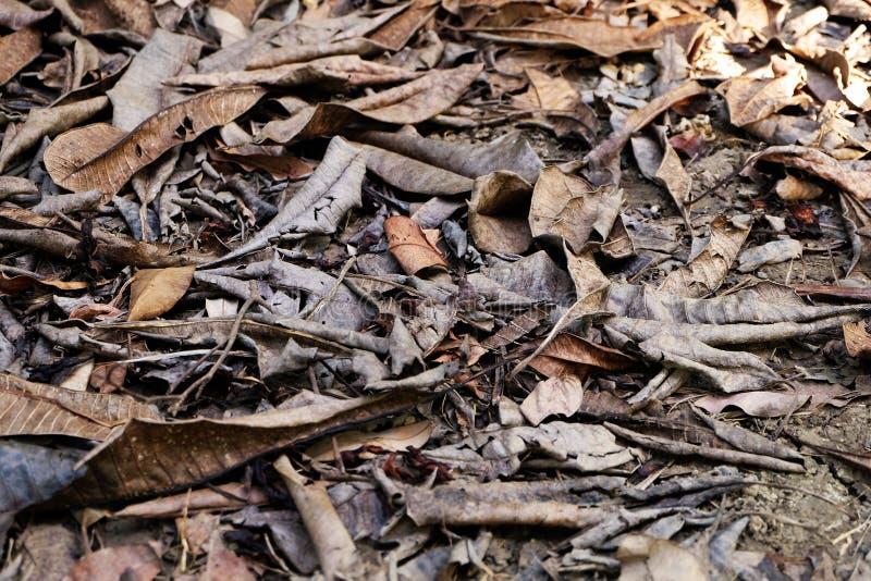 Fond des feuilles sèches, feuille morte au sol photo libre de droits