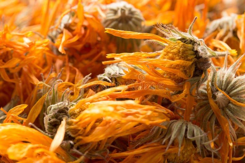 Fond des fleurs sèches du calendula images stock