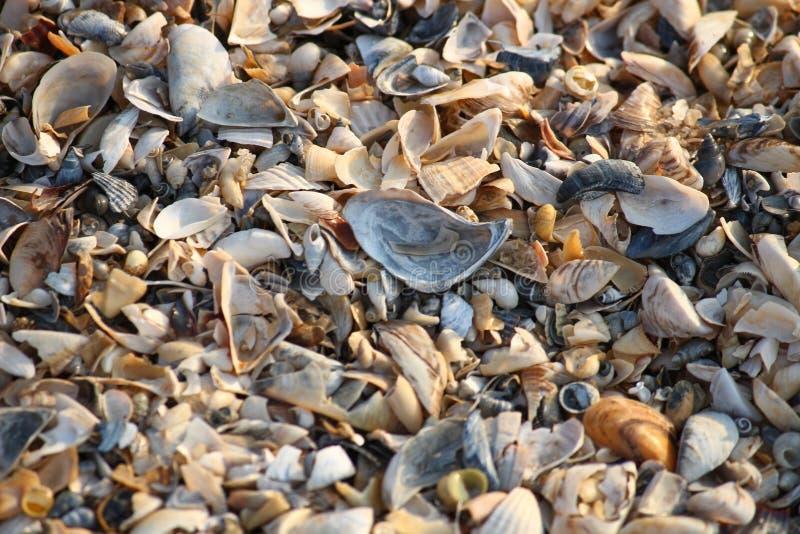 Fond des fragments cassés de coquillage sur la plage sablonneuse de l'Ukraine du sud photographie stock libre de droits