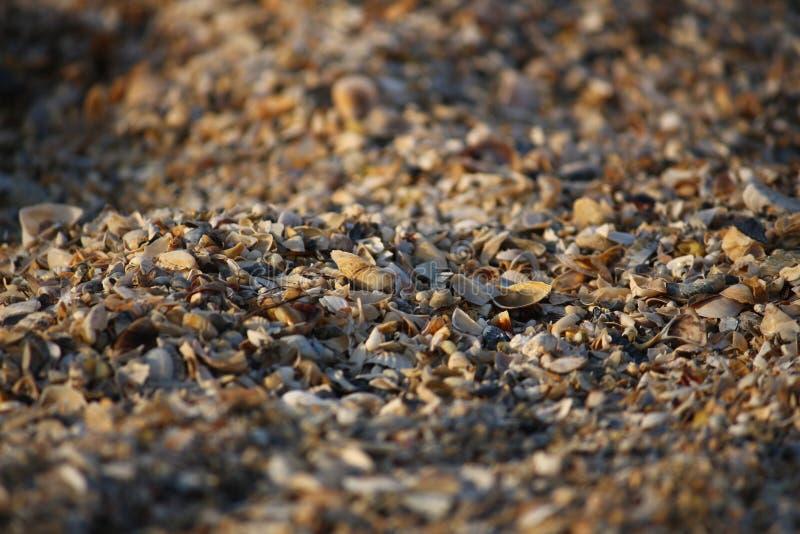 Fond des fragments cassés de coquillage sur la plage sablonneuse de l'Ukraine du sud photographie stock