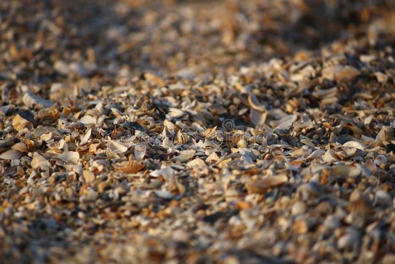 Fond des fragments cassés de coquillage sur la plage sablonneuse de l'Ukraine du sud image libre de droits