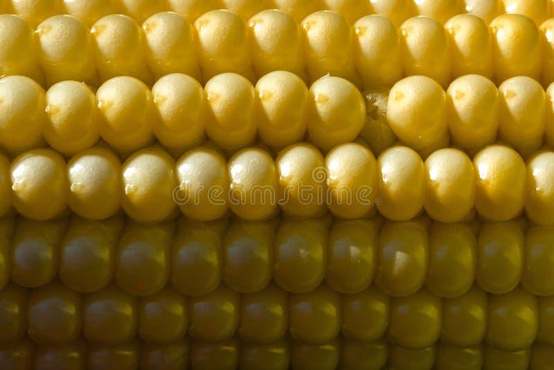 Fond des noyaux de maïs sur la roche, pendant la phase de la maturité de lait image stock