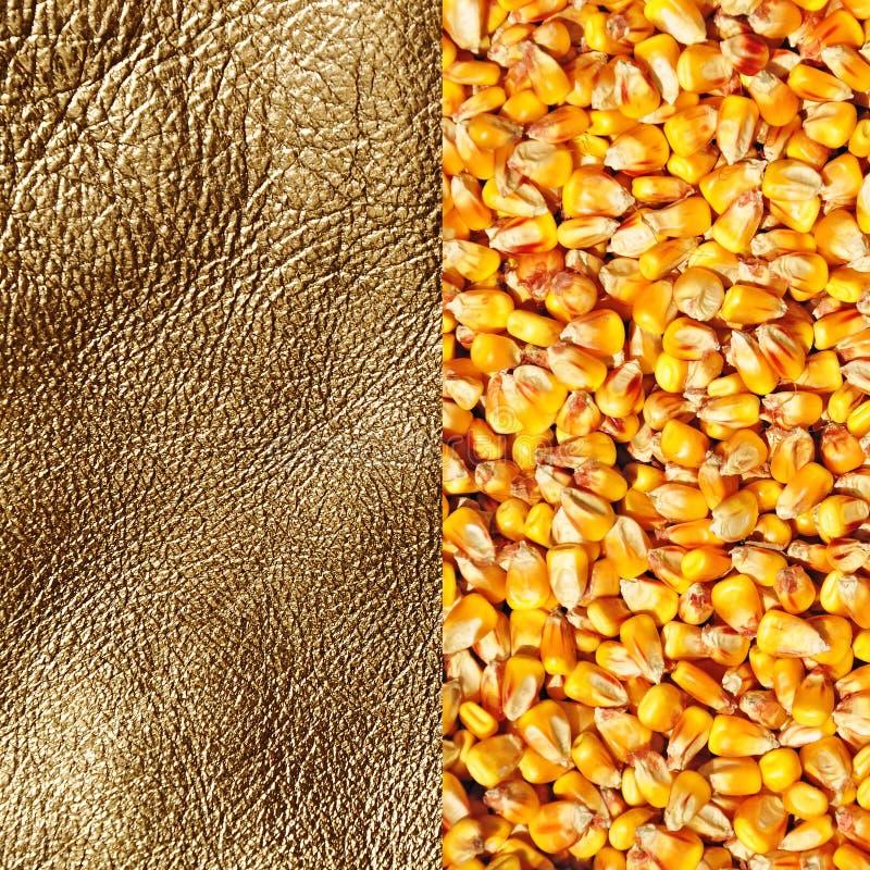 Fond des produits, maïs d'or photos stock