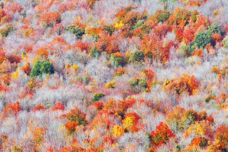 Fond des textures automnales d'arbres image libre de droits