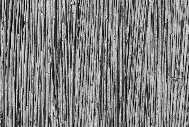 Fond des tiges sèches du plan rapproché de canne photos libres de droits
