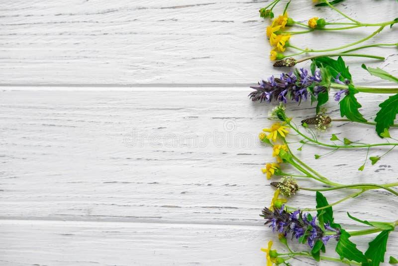 Fond des wildflowers Fond pour une banni?re avec des couleurs naturelles Banni?re avec des fleurs de Copyspeis Fond floral Fleurs photo libre de droits