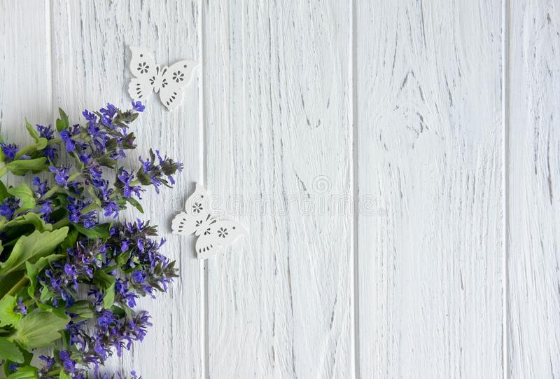 Fond des wildflowers Fond pour une banni?re avec des couleurs naturelles Banni?re avec des fleurs de Copyspeis Fond floral Fleurs photographie stock libre de droits